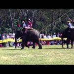 象を用いたポロの一種【エレファントポロ】のルール、費用、必要な道具など
