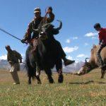 ヤクに乗っておこなうポロ競技の一つ【ヤクポロ】のルール、費用、必要な道具など